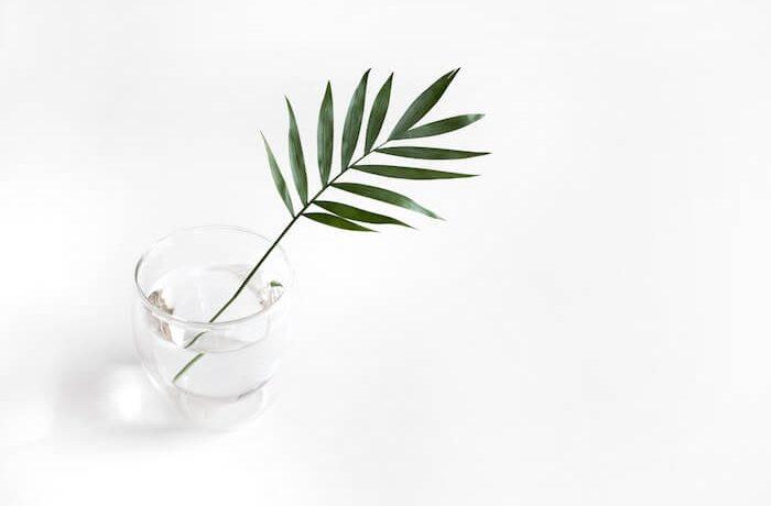 植物の入ったテーブルのコップ
