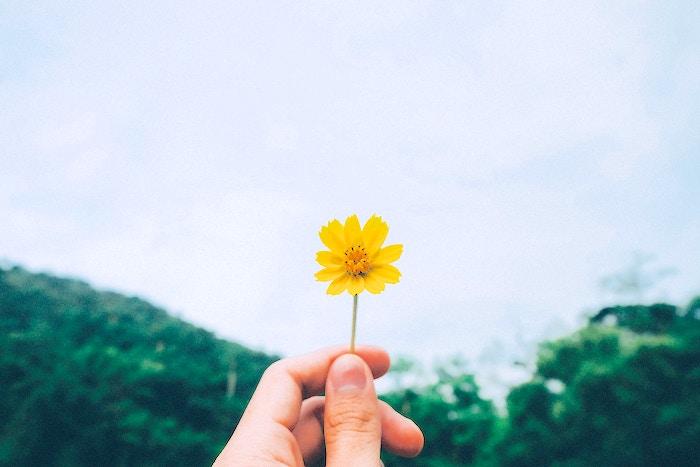 空にかざした小さな黄色い花