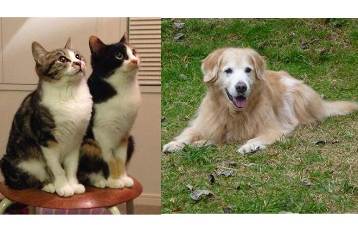 ネコと犬の写真